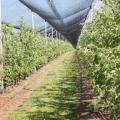 Sombrite para plantas preço