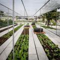 Tela sombrinte para plantas