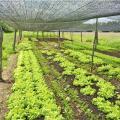 Telas para sombreamento de hortaliças